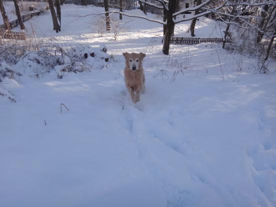 雪上の足跡_f0064906_14543041.jpg