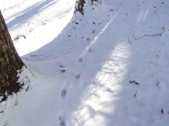 雪上の足跡_f0064906_14543336.jpg