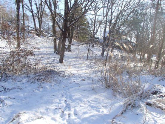 雪上の足跡_f0064906_14543792.jpg