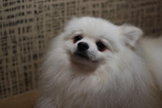 1月15日ご来店のワンちゃんです!!_b0130018_09265286.jpg