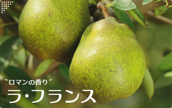 果樹の剪定・・・_c0157523_08123158.jpg