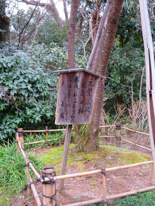 京都御苑「宗像神社と水仙」20200118_e0237645_16211036.jpg