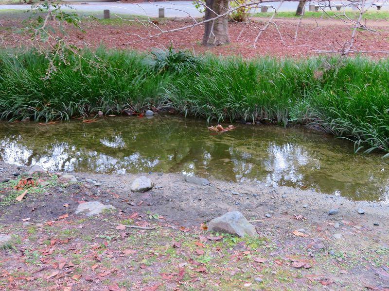 京都御苑「出水の小川」20200118_e0237645_16415031.jpg