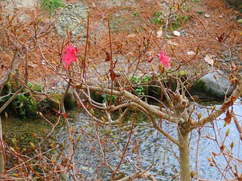 京都御苑「出水の小川」20200118_e0237645_16415033.jpg