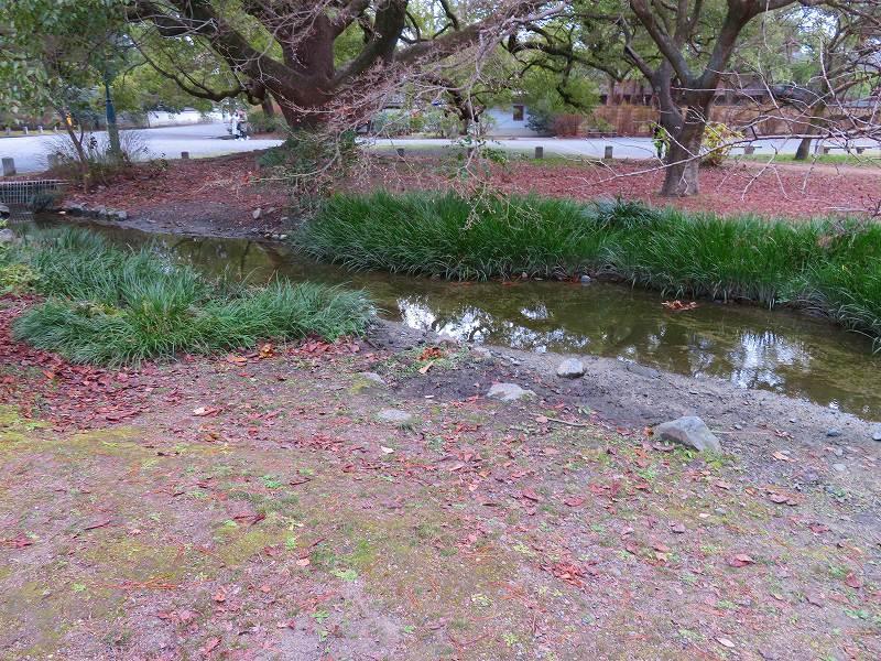 京都御苑「出水の小川」20200118_e0237645_16415095.jpg