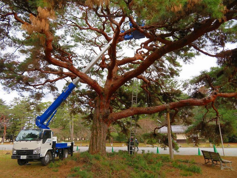 京都御苑の木々が危機に!20200118_e0237645_17042183.jpg