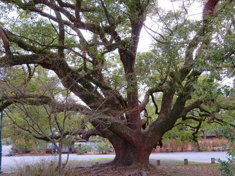 京都御苑の木々が危機に!20200118_e0237645_17042227.jpg