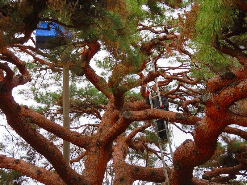 京都御苑の木々が危機に!20200118_e0237645_17042277.jpg
