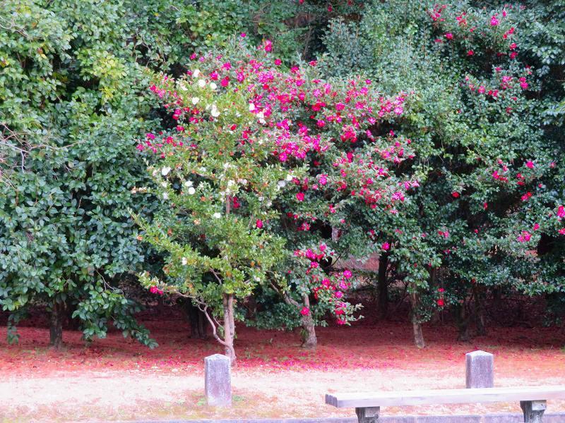 京都御苑の木々が危機に!20200118_e0237645_17042295.jpg