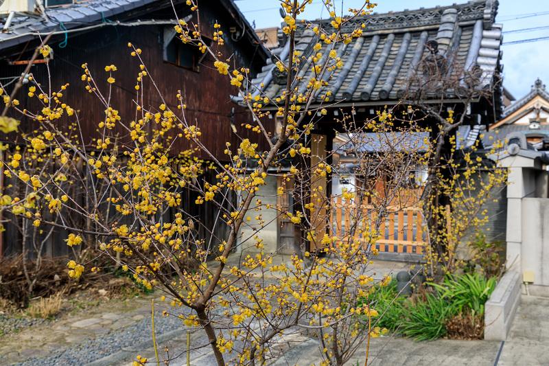 勝念寺の黄色い彩り_f0155048_2215515.jpg