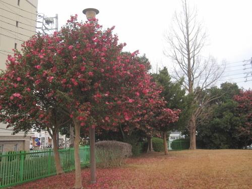 長く咲く冬の花_f0245650_06474798.jpg