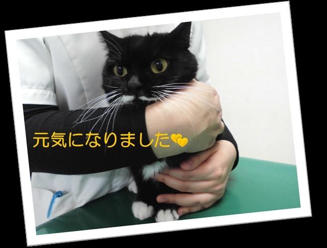 【サチちゃんの不調はどこから??】_b0059154_14365112.jpg