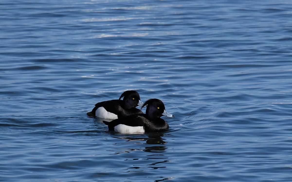 水辺の鳥たち_e0220159_21221237.jpg