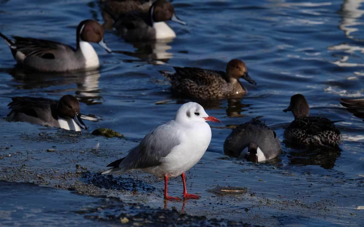 水辺の鳥たち_e0220159_21230676.jpg