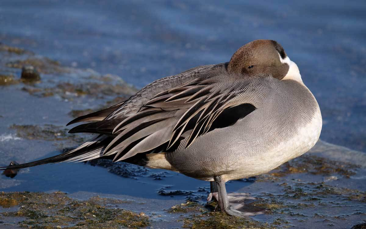 水辺の鳥たち_e0220159_21243647.jpg