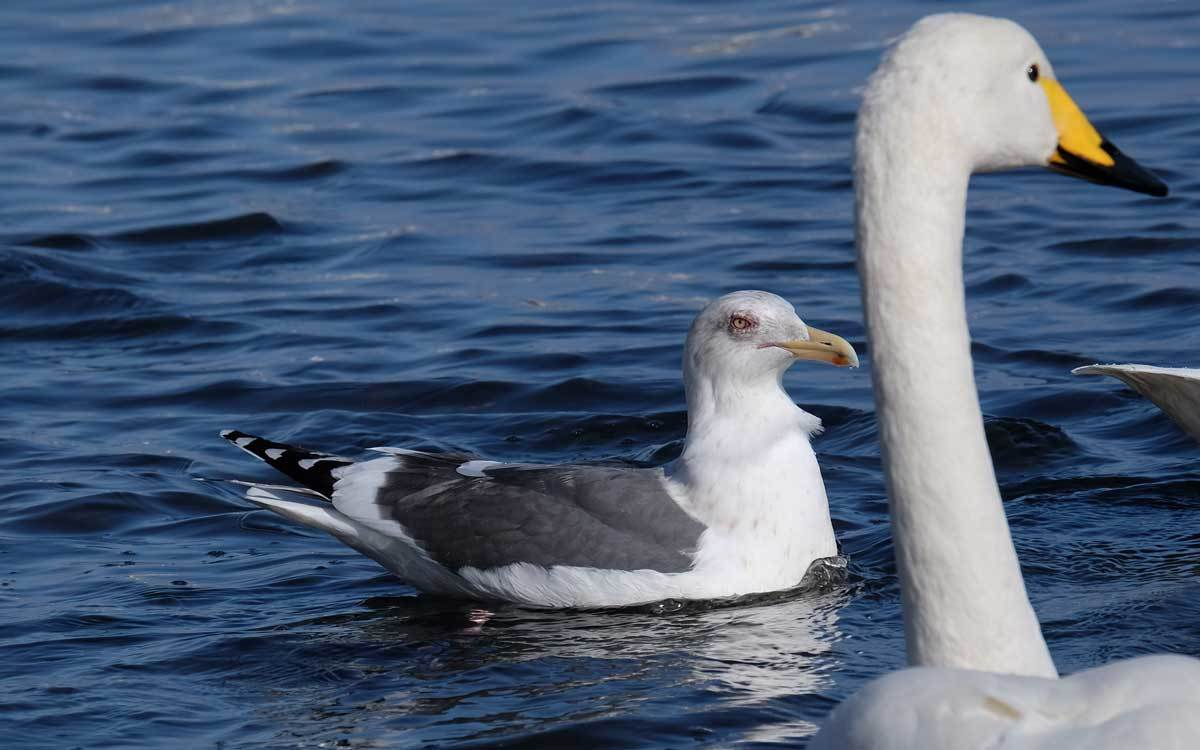水辺の鳥たち_e0220159_21261342.jpg