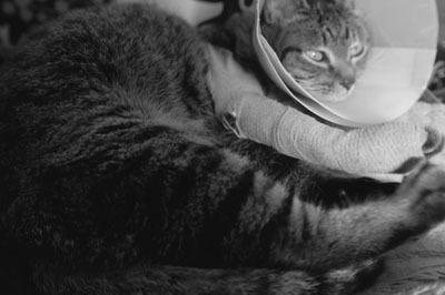 家猫 療養中_b0160363_21425196.jpg