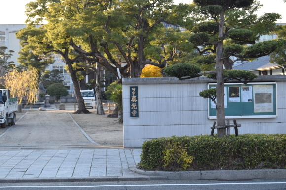 真光寺前の笹屋の八重菊_f0347663_15022214.jpg