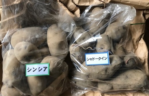 たねとうでシンシアとシャドークイーンの種芋購入1・16_c0014967_05545137.jpg