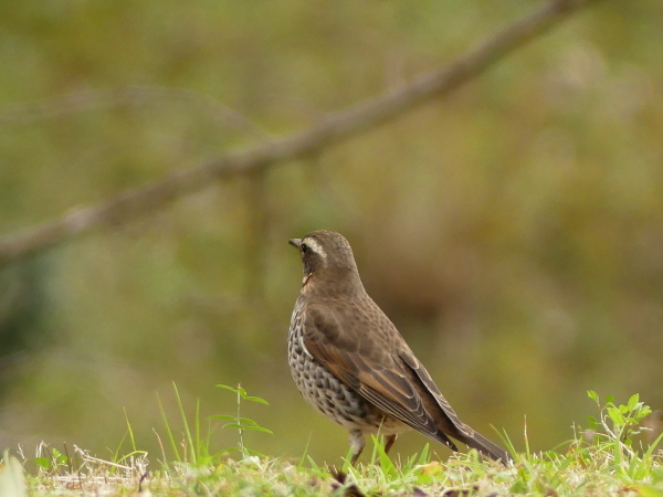 冬の鳥たち_a0351368_23402773.jpg