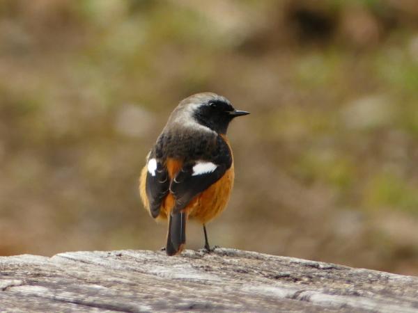 冬の鳥たち_a0351368_23403515.jpg