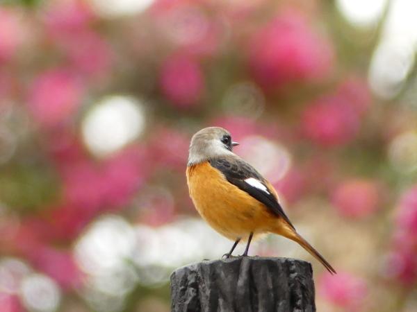 冬の鳥たち_a0351368_23404413.jpg