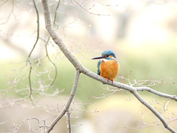 冬の鳥たち_a0351368_23412362.jpg