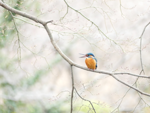 冬の鳥たち_a0351368_23413347.jpg