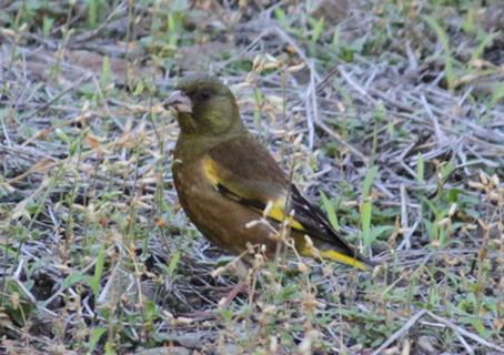 コラムリレー(第148回)「渡る鳥渡らない鳥」_f0228071_13450086.jpg