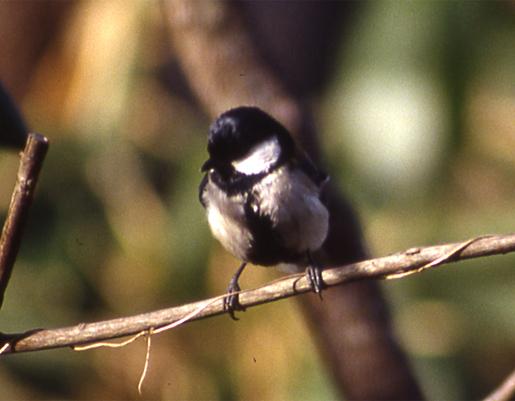 コラムリレー(第148回)「渡る鳥渡らない鳥」_f0228071_13451423.jpg
