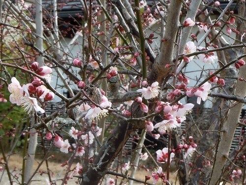 路傍の花、樹々の鳥(365) ~ 春の兆し ~_b0102572_14145217.jpg
