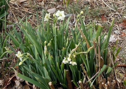 路傍の花、樹々の鳥(365) ~ 春の兆し ~_b0102572_14152801.jpg