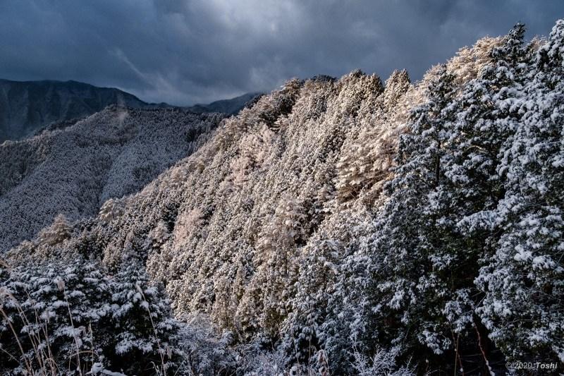待望の雪 野迫川_c0350572_11535833.jpg