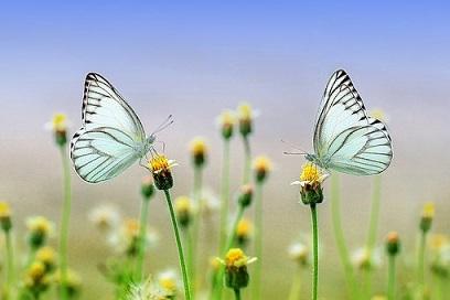 実相!人生の「変化」をスムーズに起こす時のコツとは! #101_b0225081_0495422.jpg