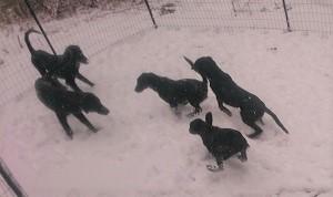 また、雪でした_b0084194_17455798.jpg
