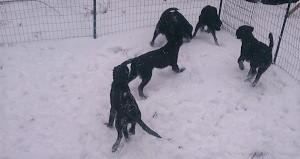 また、雪でした_b0084194_17462592.jpg