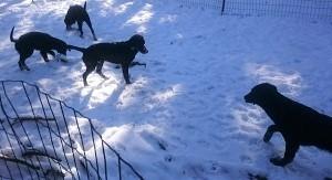 また、雪でした_b0084194_17470833.jpg