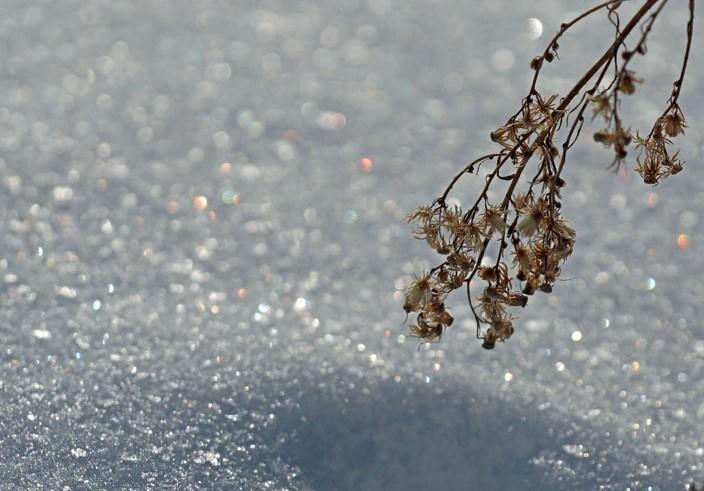 冷えた朝_d0162994_08595999.jpg