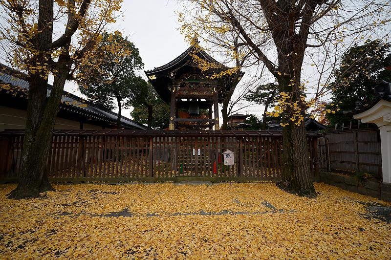 2019京都の紅葉・下京区 西本願寺_f0032011_19355016.jpg