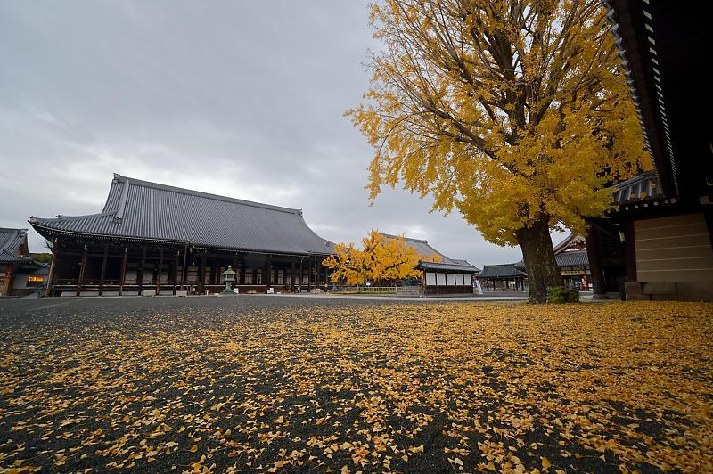 2019京都の紅葉・下京区 西本願寺_f0032011_19355070.jpg