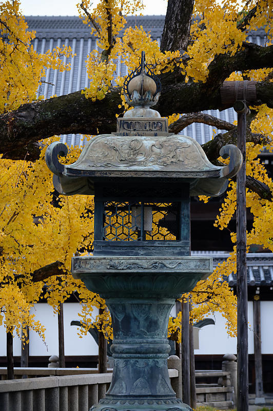 2019京都の紅葉・下京区 西本願寺_f0032011_19355124.jpg