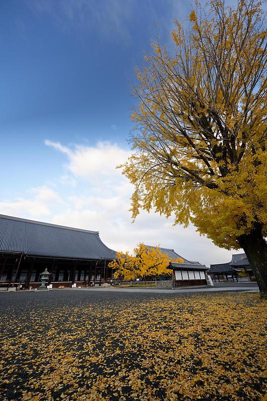 2019京都の紅葉・下京区 西本願寺_f0032011_19402637.jpg