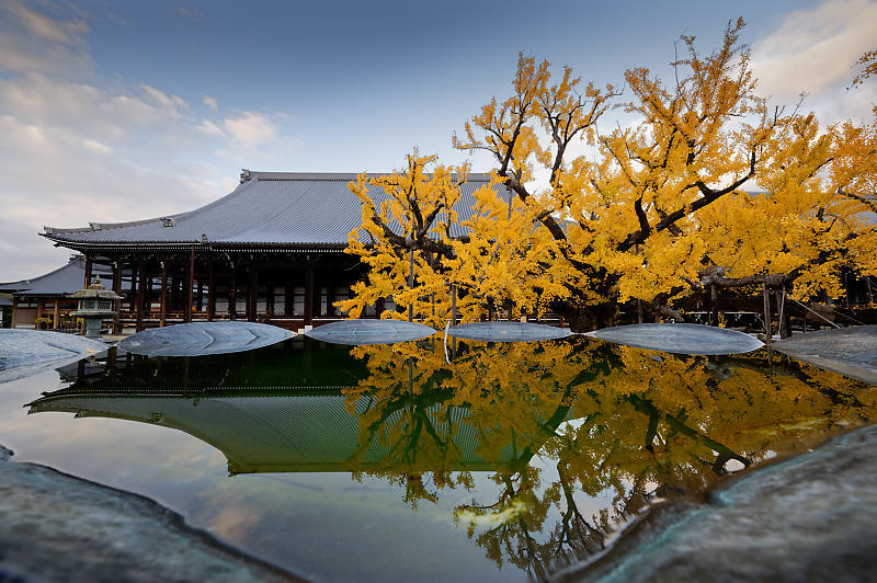 2019京都の紅葉・下京区 西本願寺_f0032011_19402652.jpg