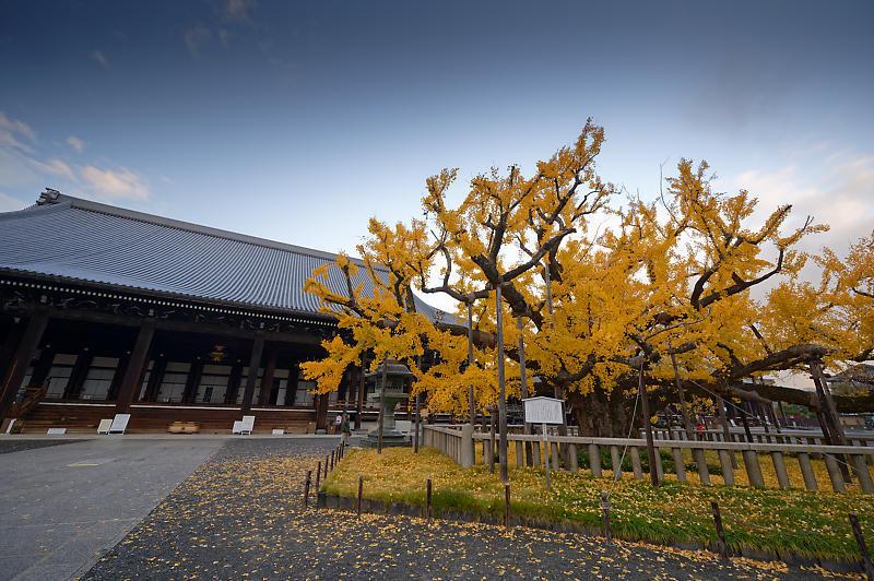 2019京都の紅葉・下京区 西本願寺_f0032011_19402693.jpg