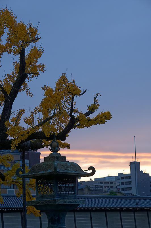 2019京都の紅葉・下京区 西本願寺_f0032011_19405009.jpg