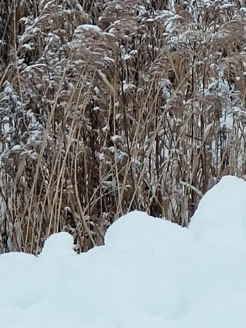 久しぶりの雪かき_b0019313_16494822.jpg