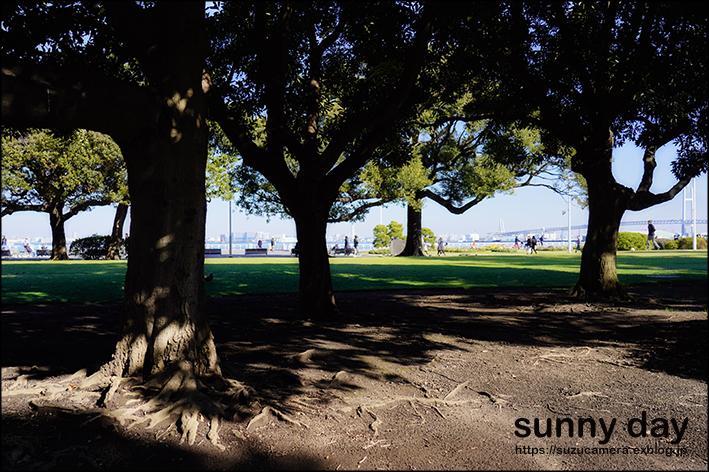 SUNNY DAY_f0100215_00421950.jpg