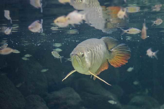 板橋区立熱帯環境植物館~大水槽の個性派たち:ボルネオカワガメ_b0355317_22074517.jpg