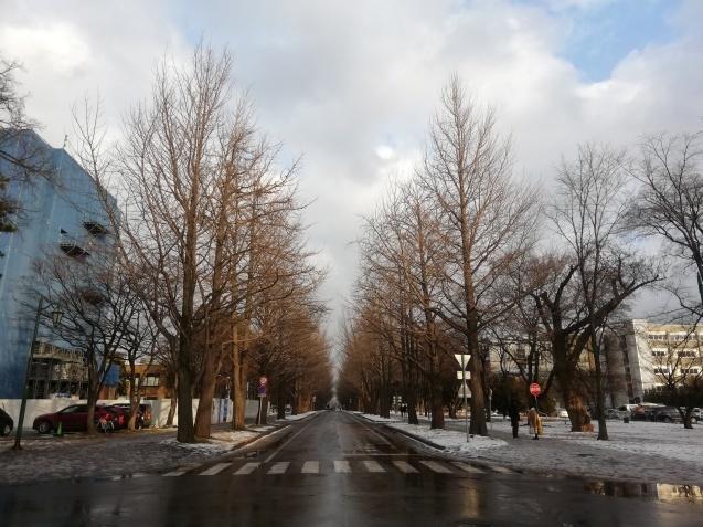 北海道大学札幌キャンパスをお散歩_b0129725_16370237.jpg