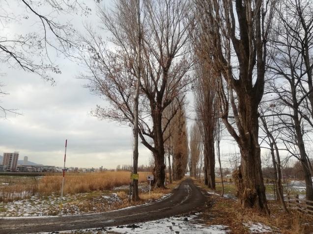 北海道大学札幌キャンパスをお散歩_b0129725_16373867.jpg